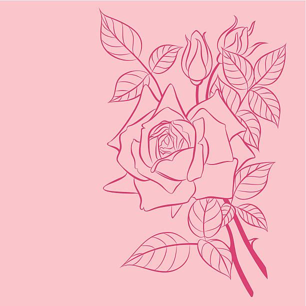 rose – Vektorgrafik