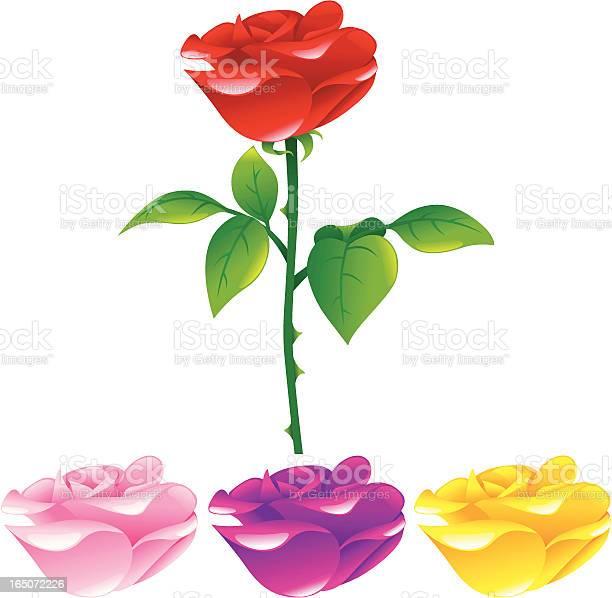 Rose vector id165072226?b=1&k=6&m=165072226&s=612x612&h=jeb2hn5tcdur13kgazeg2k9hqugdj ay0cdhojwzwck=