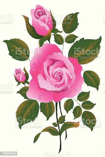Rose vector id165693024?b=1&k=6&m=165693024&s=612x612&h=amywnqwjvfliec5dg6rjj4h9zqpcvpqf0ngltyxyjew=