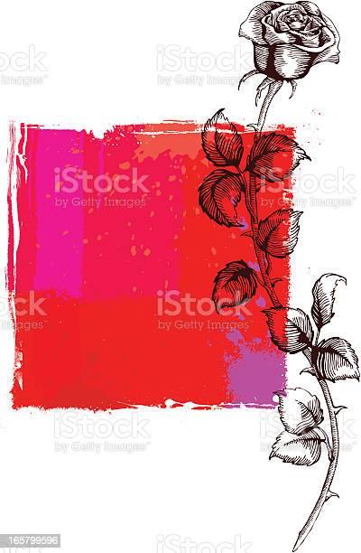 Rose vector id165799596?b=1&k=6&m=165799596&s=612x612&h=mwxvjrehu57ye9hy3lci2reknwkyvmqyseu4l4unpzm=