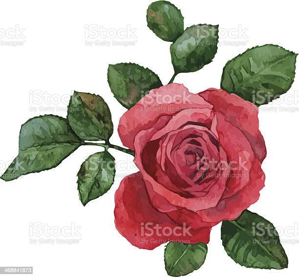 Rose vector id468841873?b=1&k=6&m=468841873&s=612x612&h=7p rkrcqwqdrqzsgq40vd8nmazqjz4wuohjmixzo 9w=