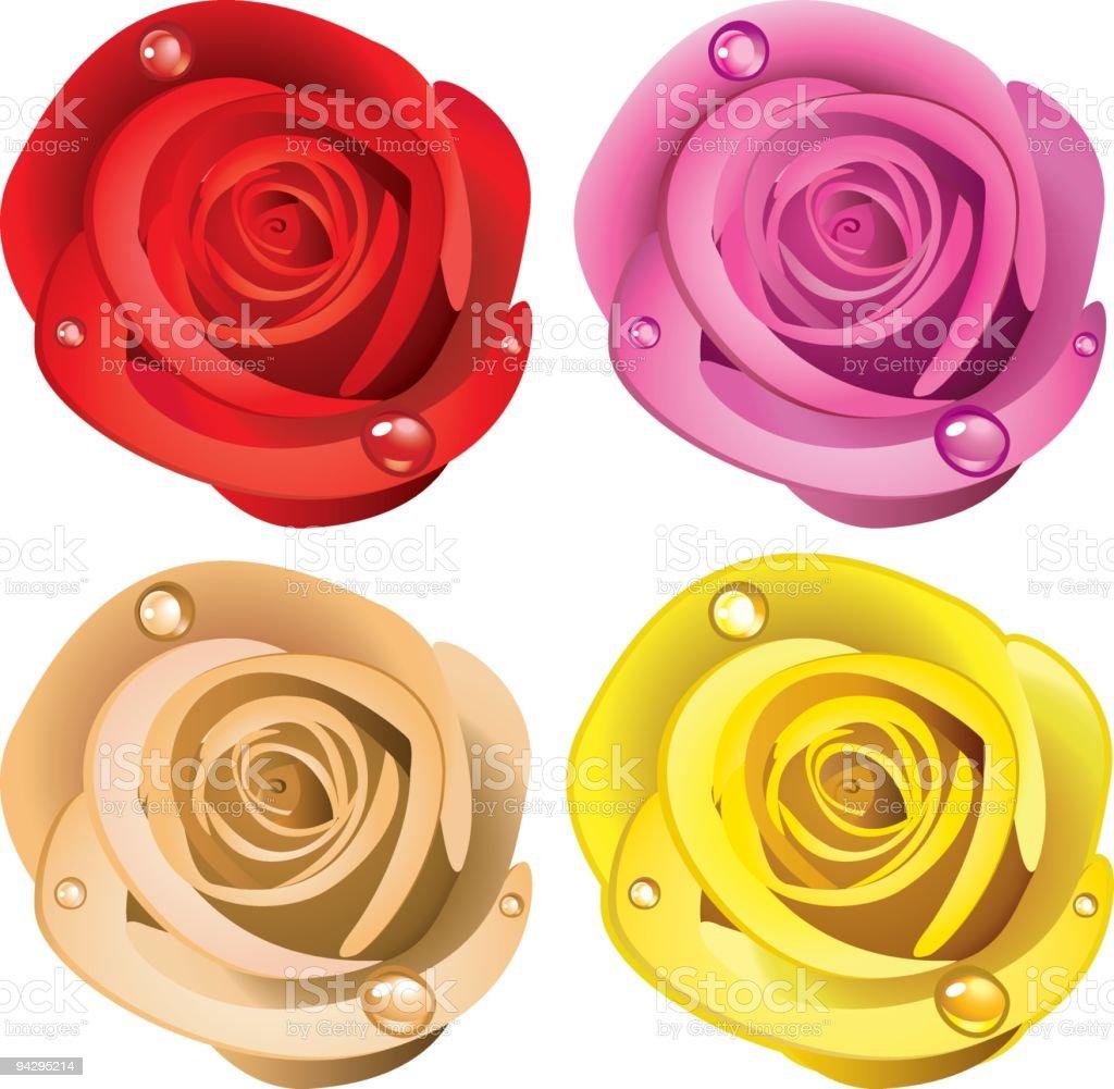 Rose vector art illustration