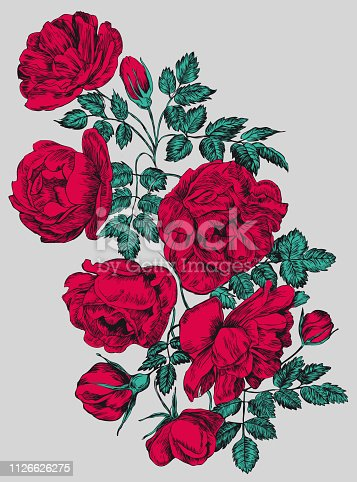 Rose vector illustration, engraving . Red flowers and buds