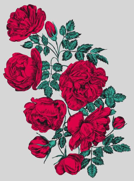 illustrazioni stock, clip art, cartoni animati e icone di tendenza di rose vector illustration, engraving . red flowers and buds - rosa rossa