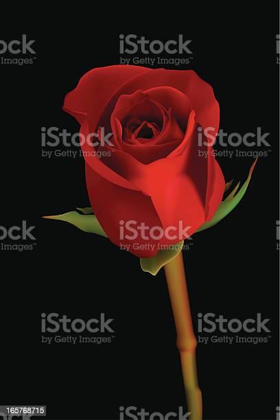 Rose vector illustration vector id165768715?b=1&k=6&m=165768715&s=612x612&h=jjbo9 78fkpiefibeiruyor35jmwzxgsll74z1rh7wm=
