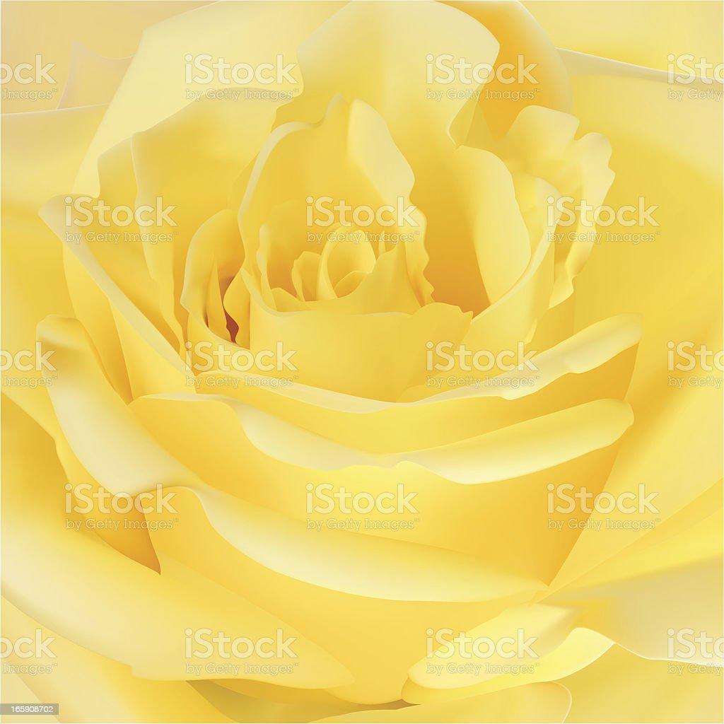 Rose - Vector Illustration royalty-free stock vector art