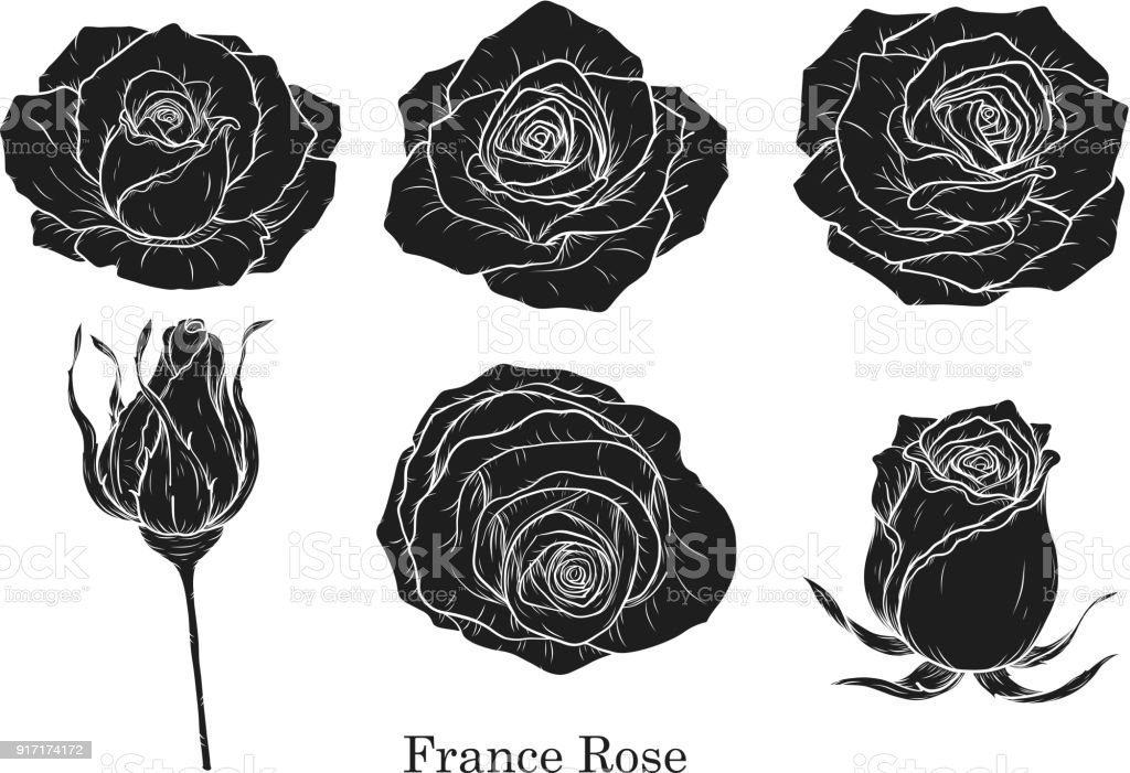 Rose Vecteur Defini Par Main De Dessin Cliparts Vectoriels Et Plus