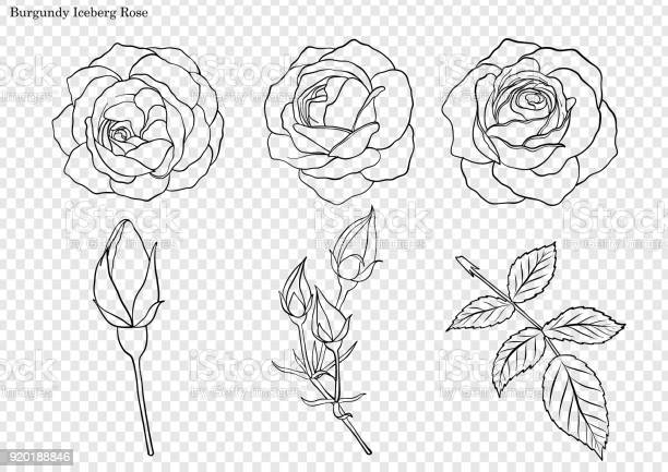 Rose vector set by hand drawing vector id920188846?b=1&k=6&m=920188846&s=612x612&h=cfxd3iocjdbokemkoo1pqjlar3ir1lzpgmssenpuocy=