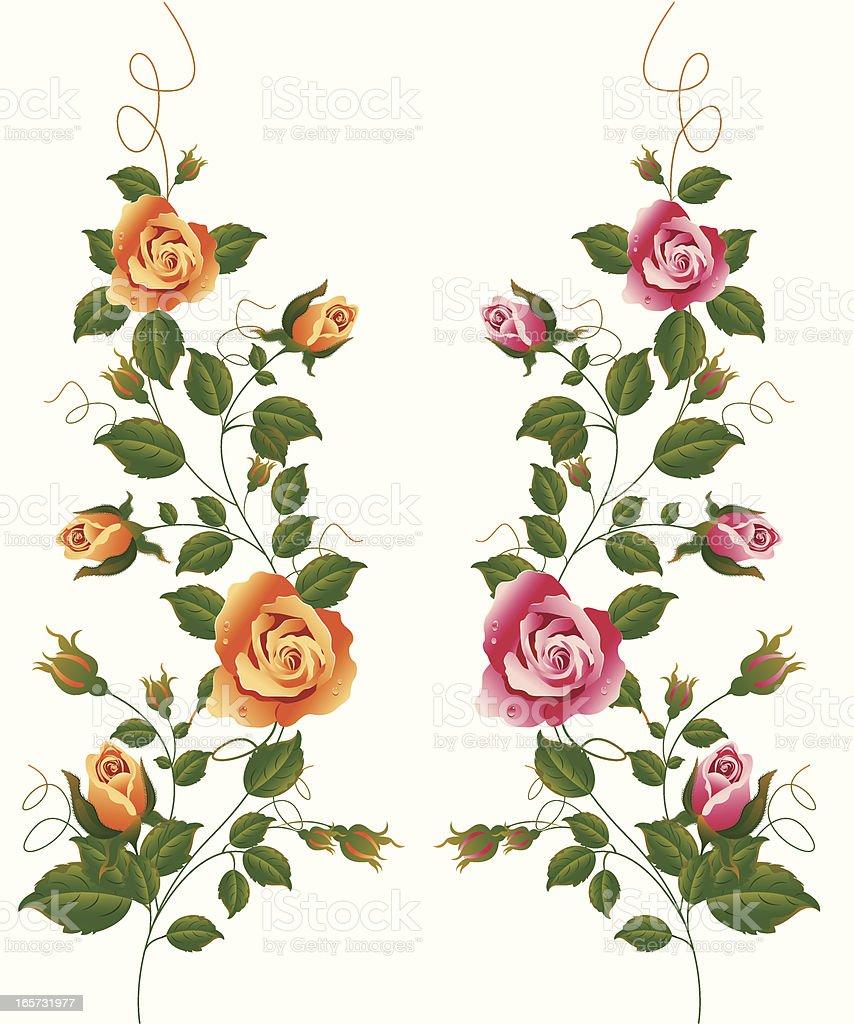 Rose Vine Set Stock Vector Art 165731977 Istock