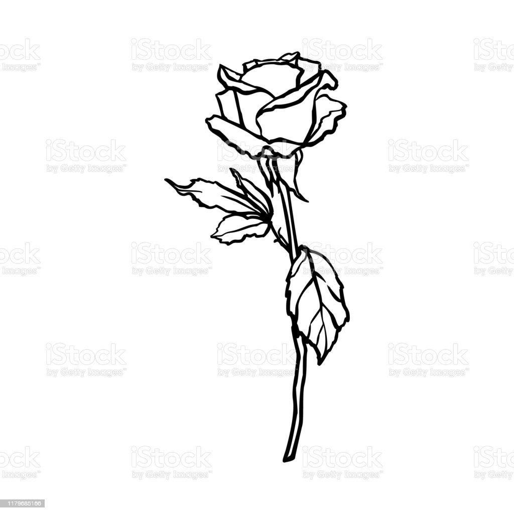 Rosebud Line Drawing Vector Outline Flower In A Trendy Minimalist Style Stock Illustration ...