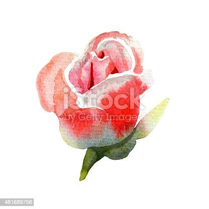 istock Rosebud, watercolor 481689756