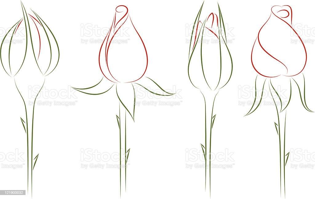 Rosebuds. Vector illustration. royalty-free stock vector art
