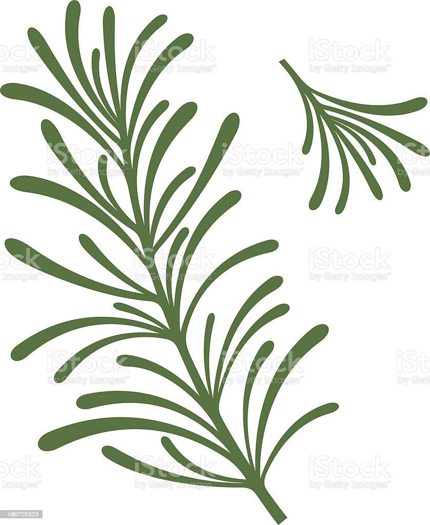 Rosemary vector art illustration