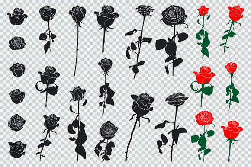 Roses black and colored silhouettes. Vector flowers icons set isolated on transparent background.