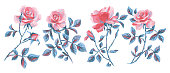 floral set isolated on white. Large pink red roses collection. Single flowers for prints, card, poster, banner, icons.