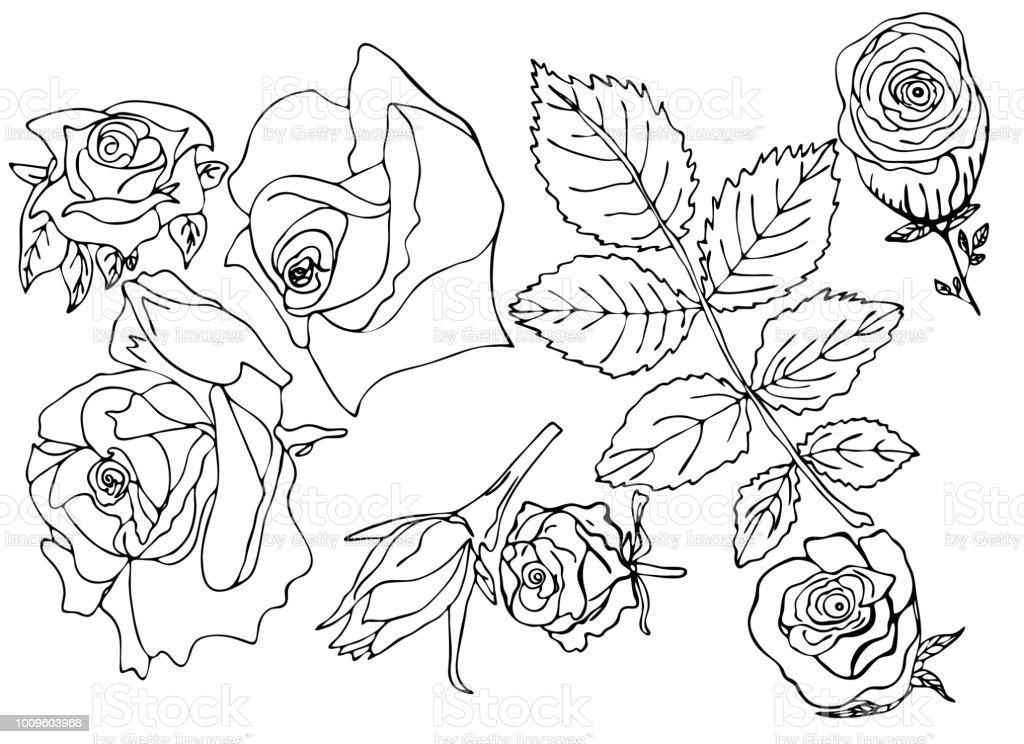 Vetores De Linhas De Linhas De Botões Rosas Flores Colorir E