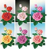 Roses of six colors.