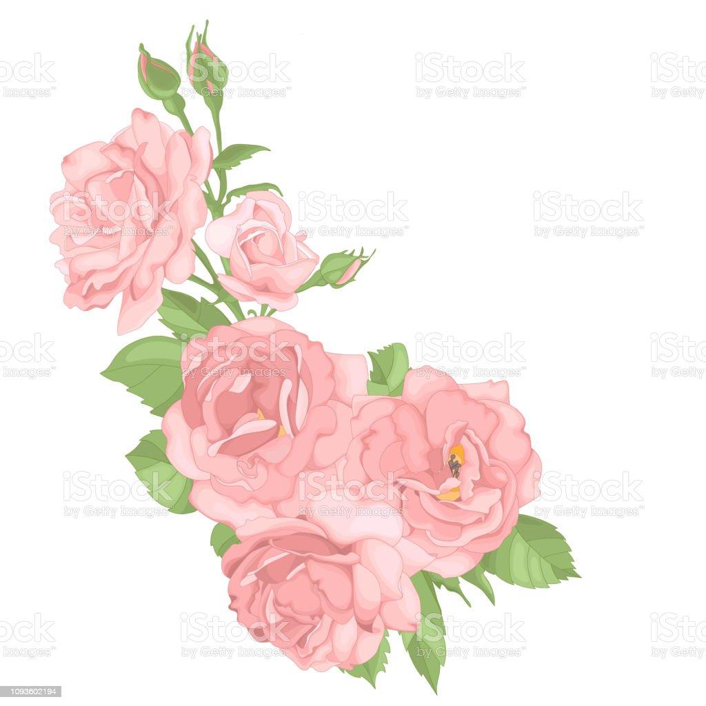 Ilustración De Rosas Perfecto Para Fondo Tarjetas De