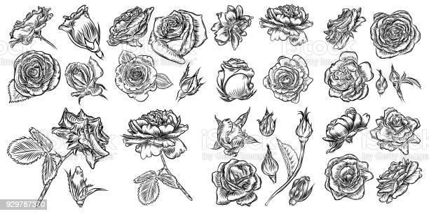 Roses set vintage flower collection wild flowers mix for design vector id929787370?b=1&k=6&m=929787370&s=612x612&h= si7ygfo0mw3e4uqzrmdwnd6txmqewcgumt7ywv5m g=