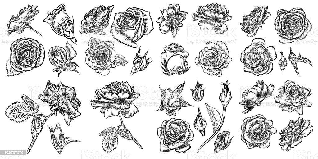 Roses set. Vintage flower collection. Wild flowers mix for design. Vector. vector art illustration