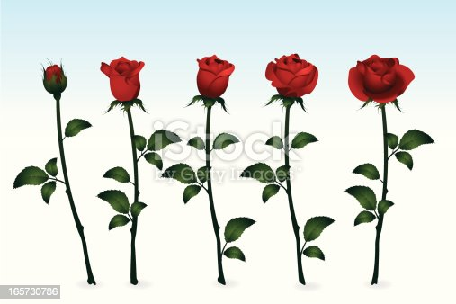 istock Roses 165730786