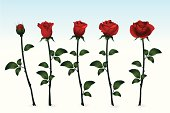 Fresh Red Roses. ZIP contains AI format and jpeg XXXLarge.