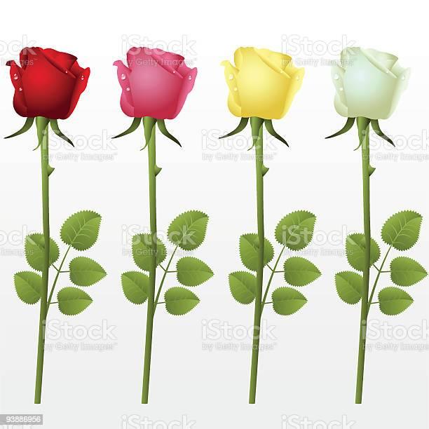 Roses vector id93886956?b=1&k=6&m=93886956&s=612x612&h=jf9m0wew7ilt4j8jjkphhqks3nb53 yytosceoig7ak=