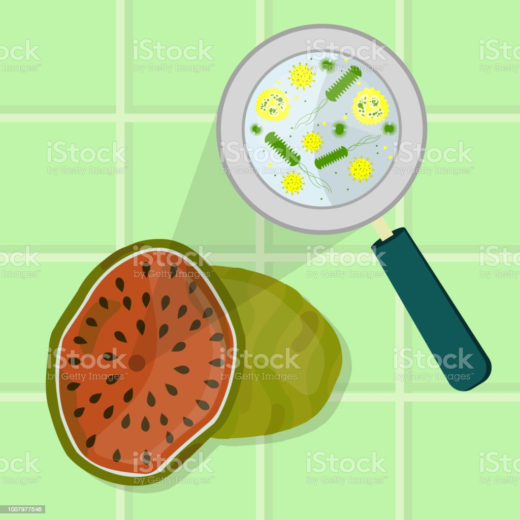 Rotten and spoiled watermelon vector art illustration