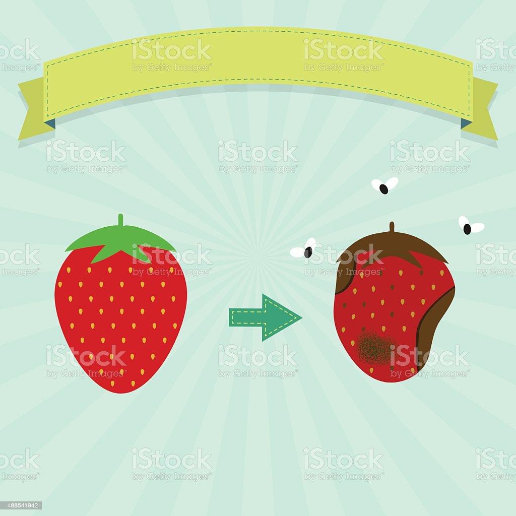 Rotten strawberry vector art illustration