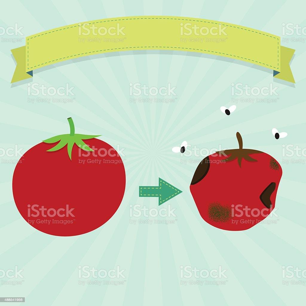 Rotten tomato vector art illustration