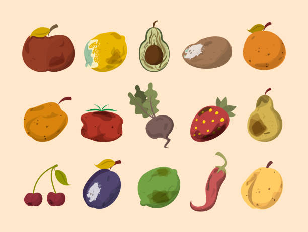Rotten vegetable and fruit vector isolated Rotten vegetable and fruit vector isolated. Food waste collection. Dirty, bad and unhealthy fruits. Food trash. rotting stock illustrations