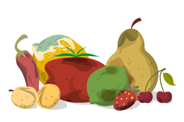 Rotten vegetable and fruit vector isolated. Rotten vegetable and fruit vector isolated. Food waste collection. Dirty, bad and unhealthy fruits. Food trash. rotting stock illustrations