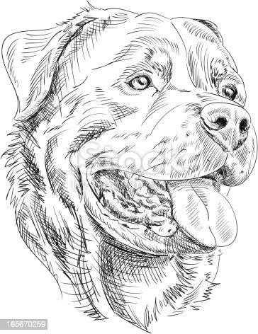 Rottweiler Dog Drawing