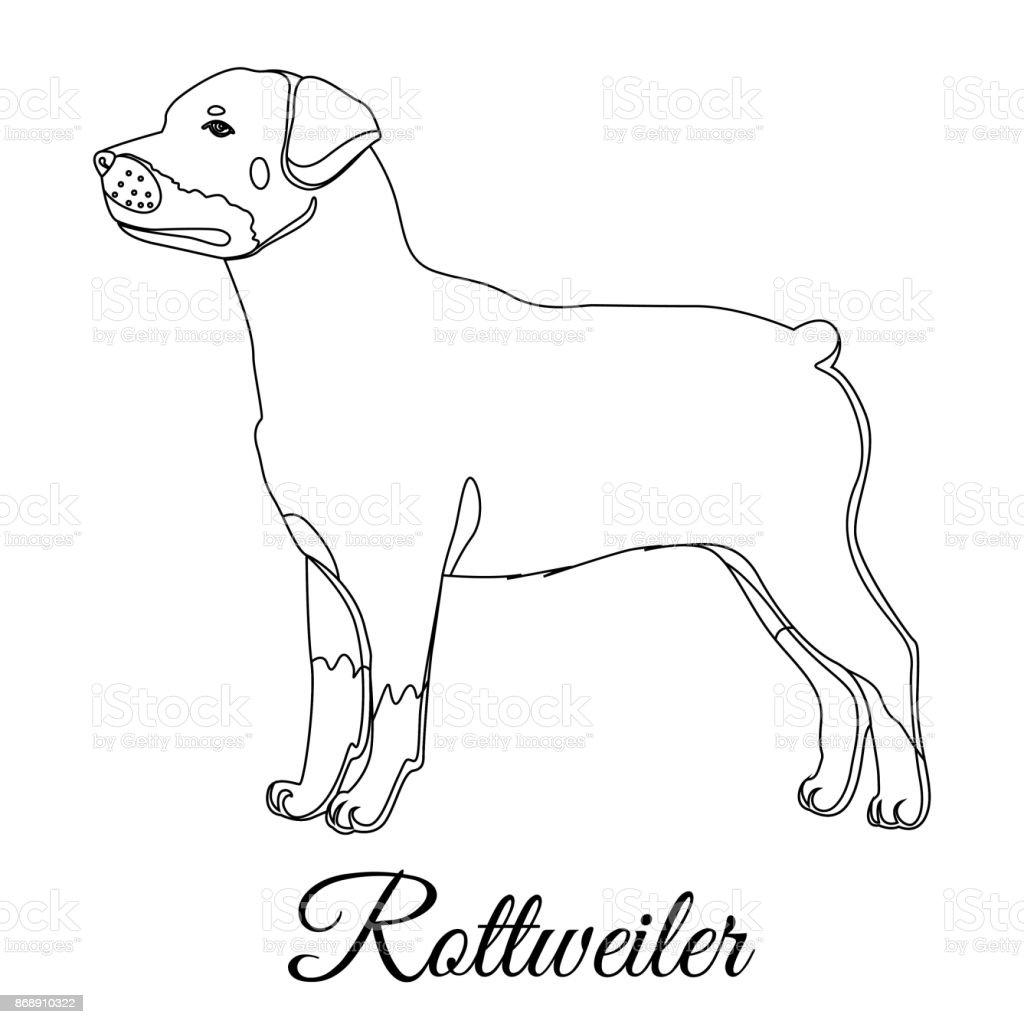 ilustración de esquema del perro de rottweiler y más