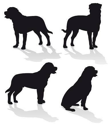 Rottweiler Dog Vector Silhouette Set Isolated