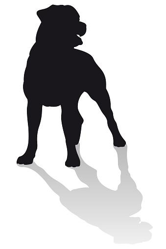 Rottweiler Dog Vector Silhouette Standing