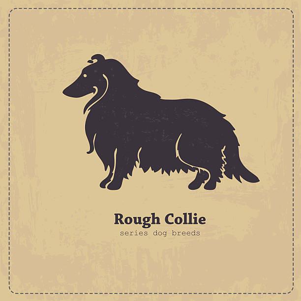 langhaar-collie hund kontur - collie stock-grafiken, -clipart, -cartoons und -symbole