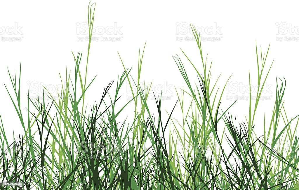 Rough grass vector art illustration