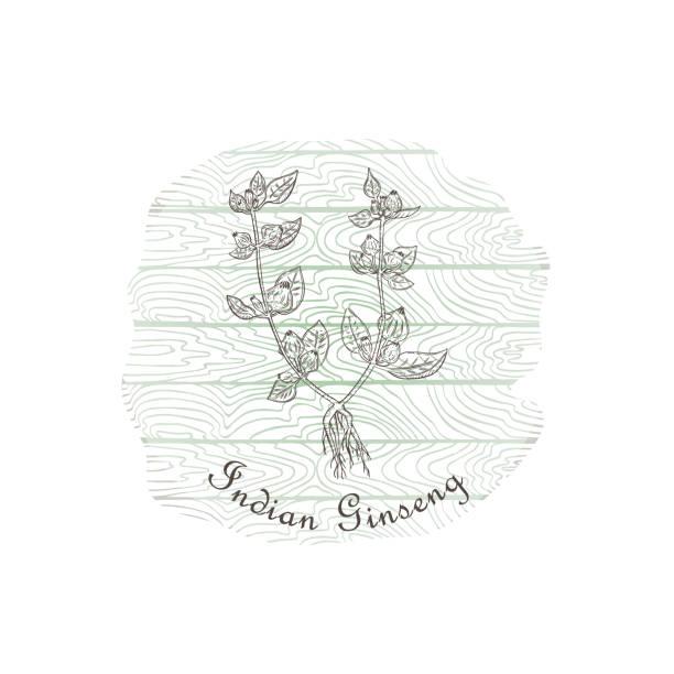 runde abzeichen mit indischen ginseng pflanze und holz-hintergrund - schlafbeere stock-grafiken, -clipart, -cartoons und -symbole