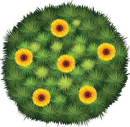 Round bush  yellow flower