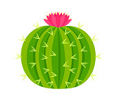 Round cactus with pink flower. Vector illustration.