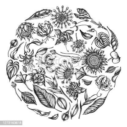 Round floral design with black and white african daisies, fuchsia, gloriosa, king protea, anthurium, strelitzia stock illustration