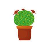 Round, juicy, bright, flowering house plant on a white background. Isolated cactus on a white background.