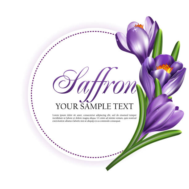 Runde Aufkleber Karte oder Einladungskarte mit Safran Blumen. Vektor-Illustration mit einem Bouquet von Krokussen. – Vektorgrafik