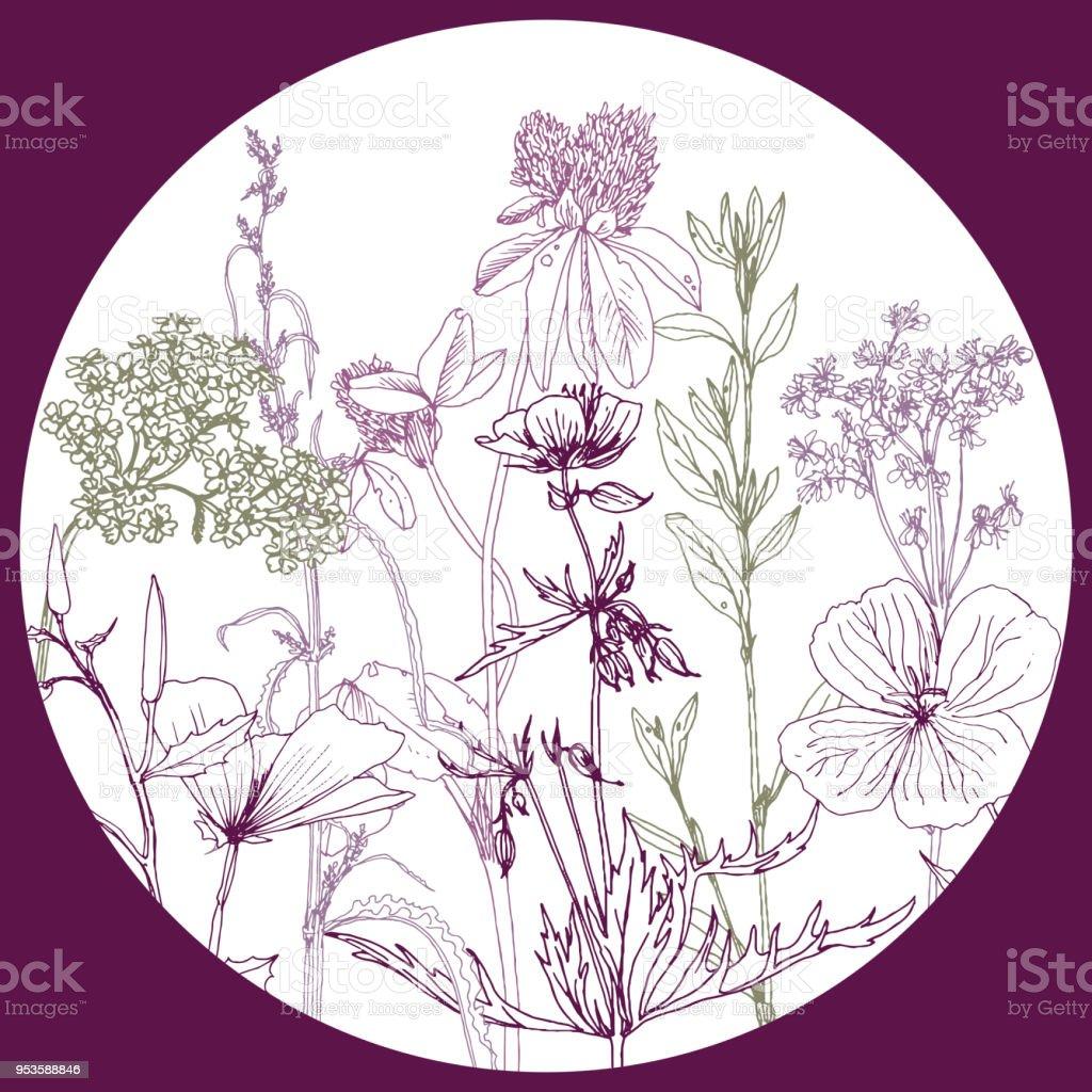 Runde Vorlage Mit Zeichnung Kräuter Und Blumen Stock Vektor