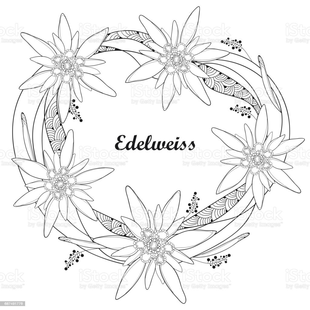 Coloriage Fleur Edelweiss.Guirlande Ronde Avec Ornement Fleur Edelweiss Ou Leontopodium