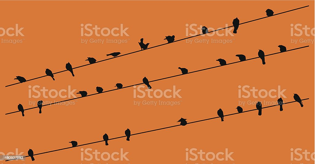 Row of Birds on a wire vector art illustration