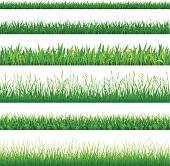 Vector collection of grass