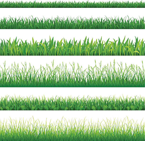 stockillustraties, clipart, cartoons en iconen met rows of different types of green grass - grasspriet