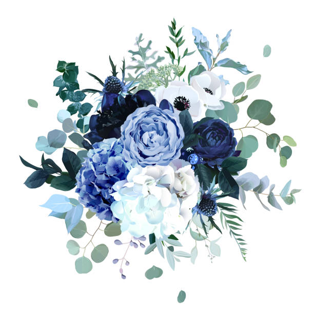 bildbanksillustrationer, clip art samt tecknat material och ikoner med royal blue, navy garden rose, vit hortensia blommor, anemon, tistel - flower bouquet blue and white